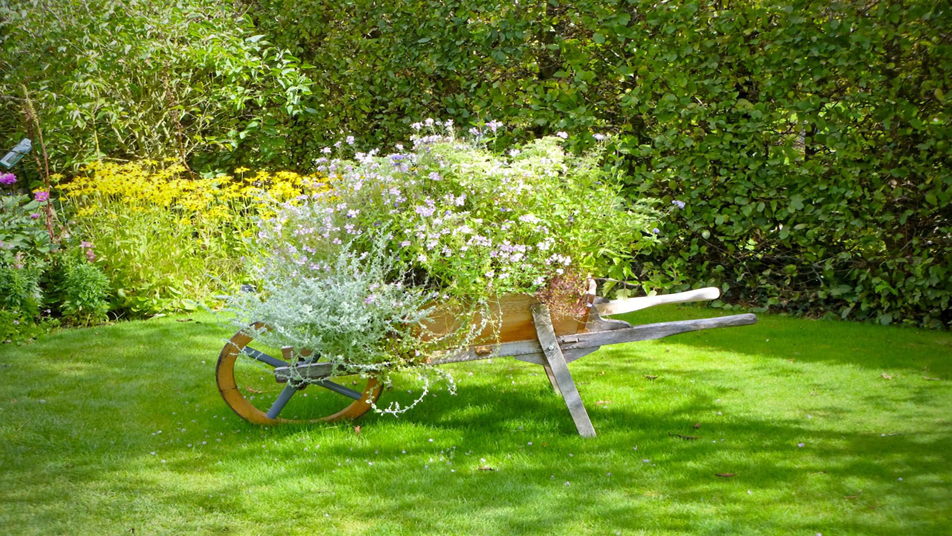 Giardinaggio Magenta