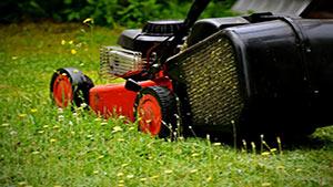 giardinaggio-pavia